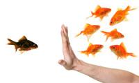 SabrinaZolkifi_Nov2013_discriminatoryfish