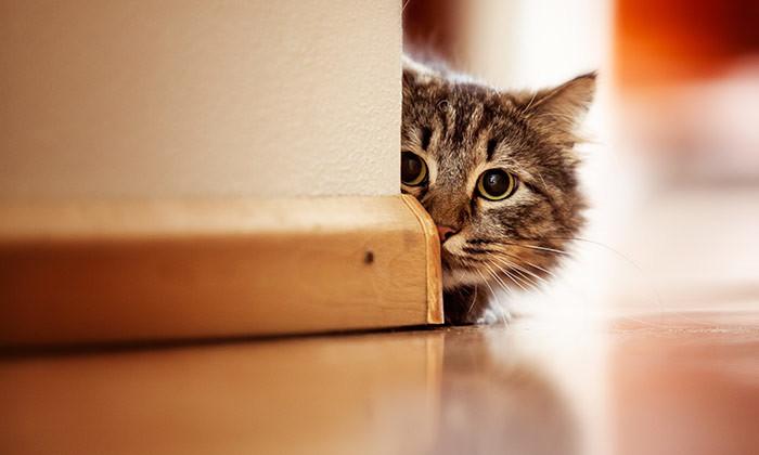 Aditi-Oct-2015-curious-cat-shutterstock