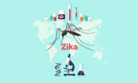 Aditi-Aug-2016-zika-virus-workplace-singapore-123rf