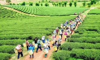 Plantation workers in Malaysia