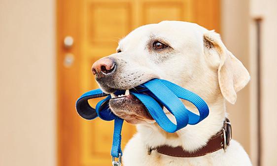 Sept 05-Anthony-dog-123rf